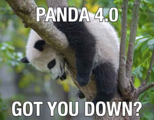 Sad Panda 4.0 Image - Search Influence